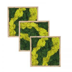 Set 3 tablouri cu licheni bicolori, 20x20 cm