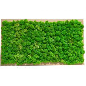 Tablou Licheni decorativi verde 43x23 cm