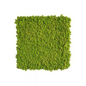 Tablou Licheni decorativi verde 53x63 tablouri cu iarba