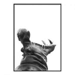 Poster DecoKing Hippopotamus, 50 x 40 cm