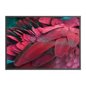 Poster DecoKing Feathers Red, 50 x 40 cm