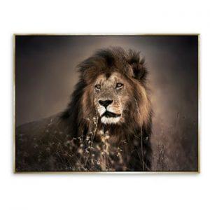 Tablou imprimat pe panza Styler Golden Lion, 62 x 82 cm
